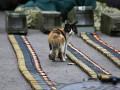 Животные недели: военный кот и малыши гепарда (фото)