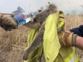 Пожары в Австралии. Исчезнут целые виды животных