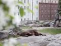 Лось выпал из окна банка в центре Хельсинки