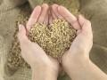 Украина увеличила экспорт зерновых в три раза за семь лет