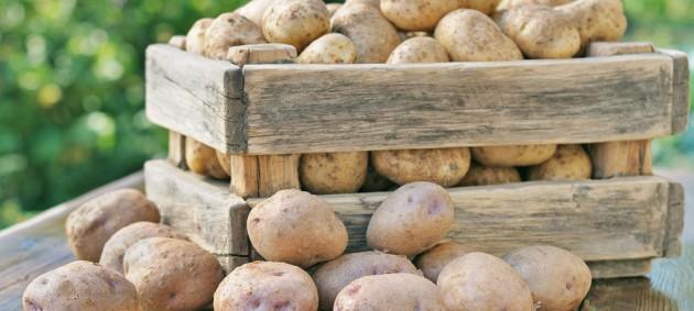 Украина импортировала рекордное количество картофеля