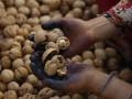 ГБР раскрыло незаконную схему экспорта грецких орехов
