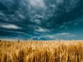 Прогноз погоды на неделю: в Украине потеплеет до +24
