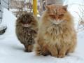 Зима пришла: как утепляются животные