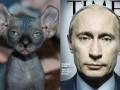 ФОТО котов, которые очень похожи на Путина