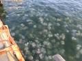 В море под Одессой — нашествие медуз