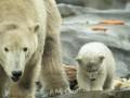 Мировые зоопарки предлагают отвлечься от инфошума