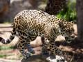 ООН потребовала запретить торговлю дикими животными