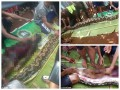В Индонезии питон проглотил женщину: змею нашли и разрезали