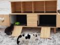На одесском пляже котам построили