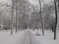 В Польше от морозов погибли 46 человек
