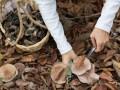 В Кировоградской области юноша купил у бабушки грибы и попал в реанимацию