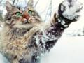 Украину накрыло снегом: Когда ждать весну