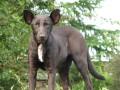 На Крещатике нашли собаку, похожую на Путина (ФОТО)