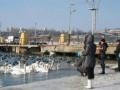В Ильичевском порту из ледового плена освободили более тысячи птиц