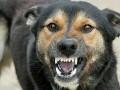 В Херсонской области домашняя собака растерзала ребенка