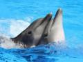 Скандал в крымском дельфинарии: дельфины и котики арестованы