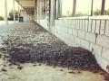 Библейская казнь: миллионы насекомых атаковали город