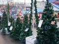 В Симферополе продают украинские елки - СМИ