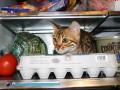 На Волыни вор запер кота в морозилке