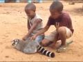 Почеши мне спинку: как лемур нежности у детей просил