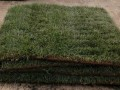 У жителя Великобритании украли искусственный газон
