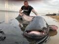 В Польше поймали сома-гиганта