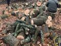 На Харьковщине чиновники заработали почти 100 млн на незаконных вырубках