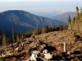 Украина на первом месте по незаконным поставкам леса в ЕС - расследование
