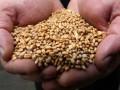 Урожай зерна в Украине может поставить новый исторический рекорд