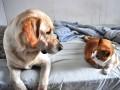 Собаки vs коты: кого украинцы любят больше