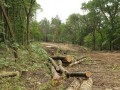 Общественность Харькова бьет тревогу из-за вырубки деревьев в парке Горького