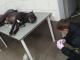 Пьяный киевлянин натравил пса на посетителя супермаркета: Патрульный застрелил собаку