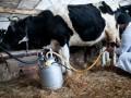 Запрет на торговлю домашними молоком, творогом и мясом решили отменить