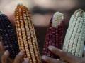 Украина запросила у Китая квоты на поставки кукурузы