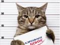 Соцсети взорвала история толстого кота, которого не пускали в самолет