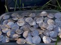 В Великобритании обнаружили крупный клад монет