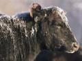 Госветфитослужба заявила о снижении стоимости идентификации животных