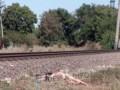 В Одессе поезд наехал на девушку в наушниках