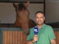 Конь в кадре: как животное мешало журналисту сюжет записывать