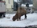 В Тернопольской области передвижной цирк бросил верблюда