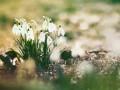 Погода на неделю: солнечные дни сменят дожди с грозами