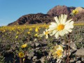 Долина Смерти ожила впервые за 10 лет