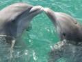 Аномальное чудо: в Азовском море дельфины выпрыгивают на берег