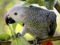 В США разговорчивый попугай выдал убийцу своего хозяина