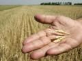 Урожай зерна в Украине превысил 57 млн тонн. За рубеж отправлено уже почти 7 млн тонн