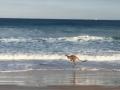 Пользователей сети повеселила утренняя пробежка кенгуру
