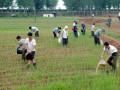 В Северной Корее голод грозит для 10 млн человек