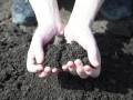 ВБ советует Украине снять мораторий на продажу земли с 2018 года