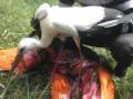 В Винницкой области милиционеры спасли птенца аиста
